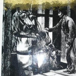 Le cheval tractait le train de berlaines