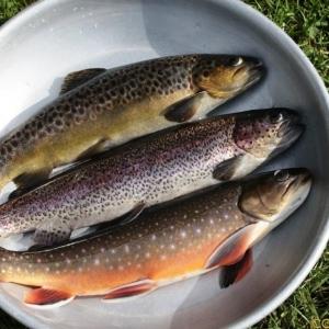 La majorité des poissons élevés sont la truite arc-en-ciel, la truite fario et le saumon de fontaine.