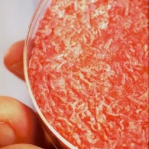 La viande in vitro
