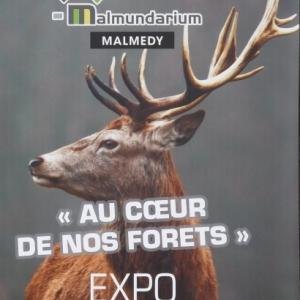 Exposition « AU COEUR DE NOS FORETS »