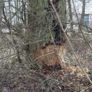 De gros arbres ont ete ronges