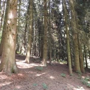 L' environnement boise de l'ermitage