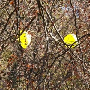 Deux ballons echappes