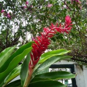 Flore de Goias