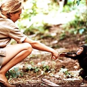 Dian Fossey et ses gorilles