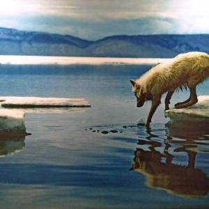 Approche du monde animal