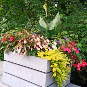 Les fleurs du Pont