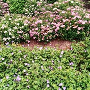 Rencontre fleurie