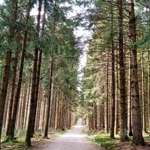 Calme de la forêt