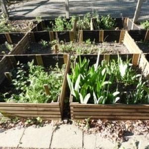 Les plantes à savon