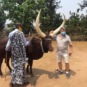 Un Directeur ciorageux face à une vache de la Royauté