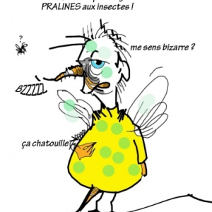 les pralines aux insectes !