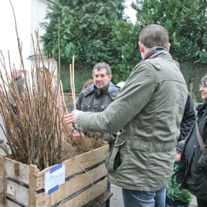 Distribution arbustes fruitiers Gedinne Ecolo