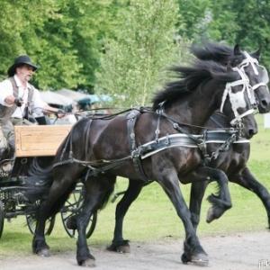 L expo qui murmurait a l oreille des chevaux