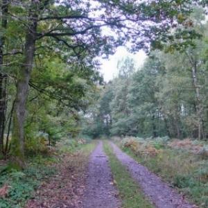 """Promenades de """"L'Ange Gardien"""" (Rienne)"""
