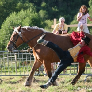 Ecuries Amourie : cheval comtois