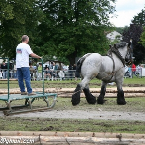 Fete du cheval, Hargnies