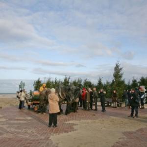 Foret de sapins namurois a Oostduinkerke, Coxyde