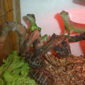 quelques reptiles...