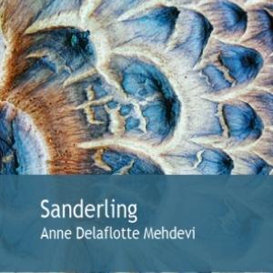 Sanderling  de Anne Delaflotte Mehdevi  Editions Gaia.