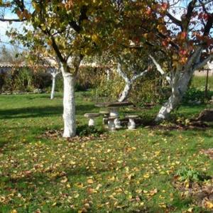 Les feuilles  des arbres fruitiers sont souvent porteuses de maladies