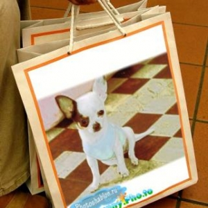 """Mannequins pour """"L'univers animalier""""_novembre 2010"""