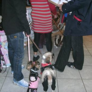 """mannequins pour """"L'univers animalier"""" Octobre 2010"""