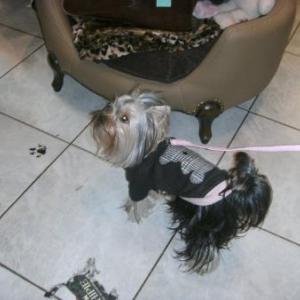 maya avec son pull louisdog