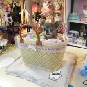 chiwa a adopte le panier osier creation de lola