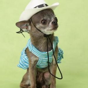chiwa cowgirl