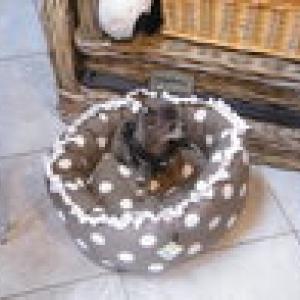 chiwa adore le panier petits pois