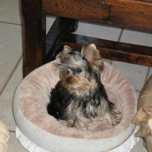 maya dans son panier louisdog