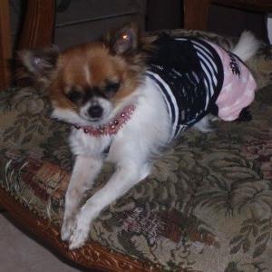 tia en puppyangel et collier reation de Mireille