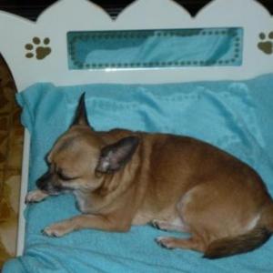 dandy apprecie son superbe lit de petit prince