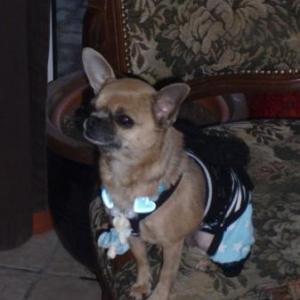 nola dans sa salopette puppyangel collier assorti