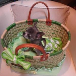 "chiwa a adopte le sac ""creation de lola"" petit bain de soleil assorti"