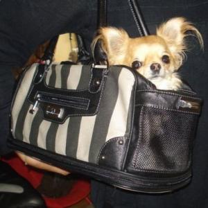Biche dans son beau sac