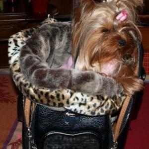 scarlett dans son joli sac