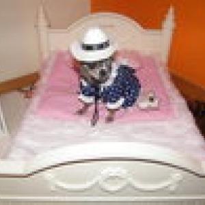 chiwa avec sa jolie robe à pois petit lit Forpetsonly