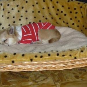 Igor apprecie son canape polo rouge