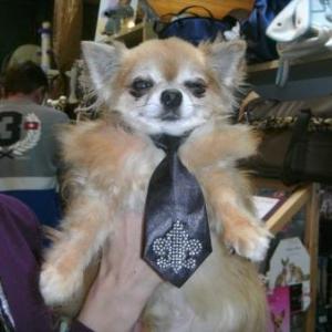 cortes avec sa jolie cravatte attention les filles!