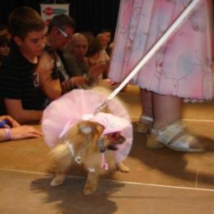 Lady finaliste au salon du chien a Ciney
