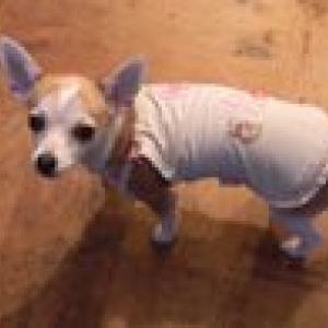Lily en garde robes paris