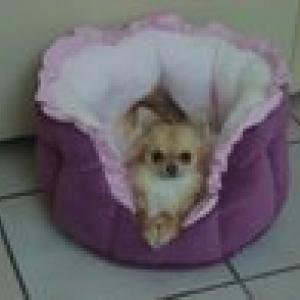 lili dans son nouveau panier creation de lola