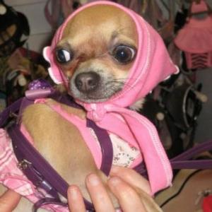 channel avec son joli foulard