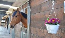 location box cheval