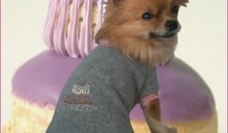 """Hotton. """"L'Univers animalier"""", un véritable paradis pour chiens très gâtés! Lola top-modèle pour """"Garde Robe Paris""""."""