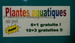 plantes aquatiques et décors d'aquarium
